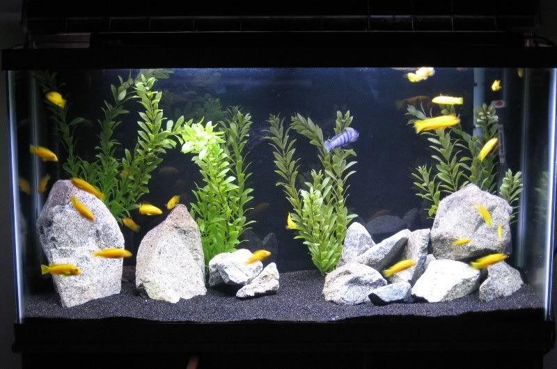 Mckenna07 S Image Tropical Fish Tanks Aquarium Sand Fish Tank