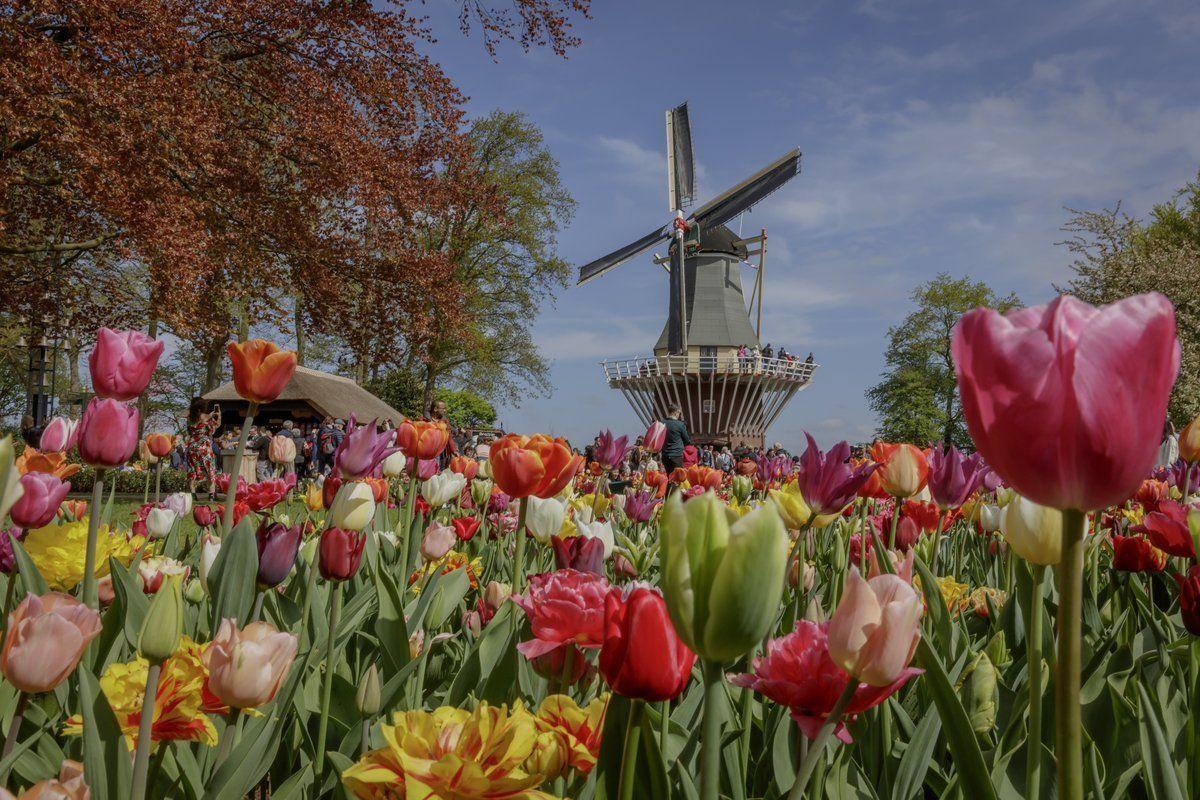 Keukenhof Tickets Tours 2020 Season With Images Amsterdam