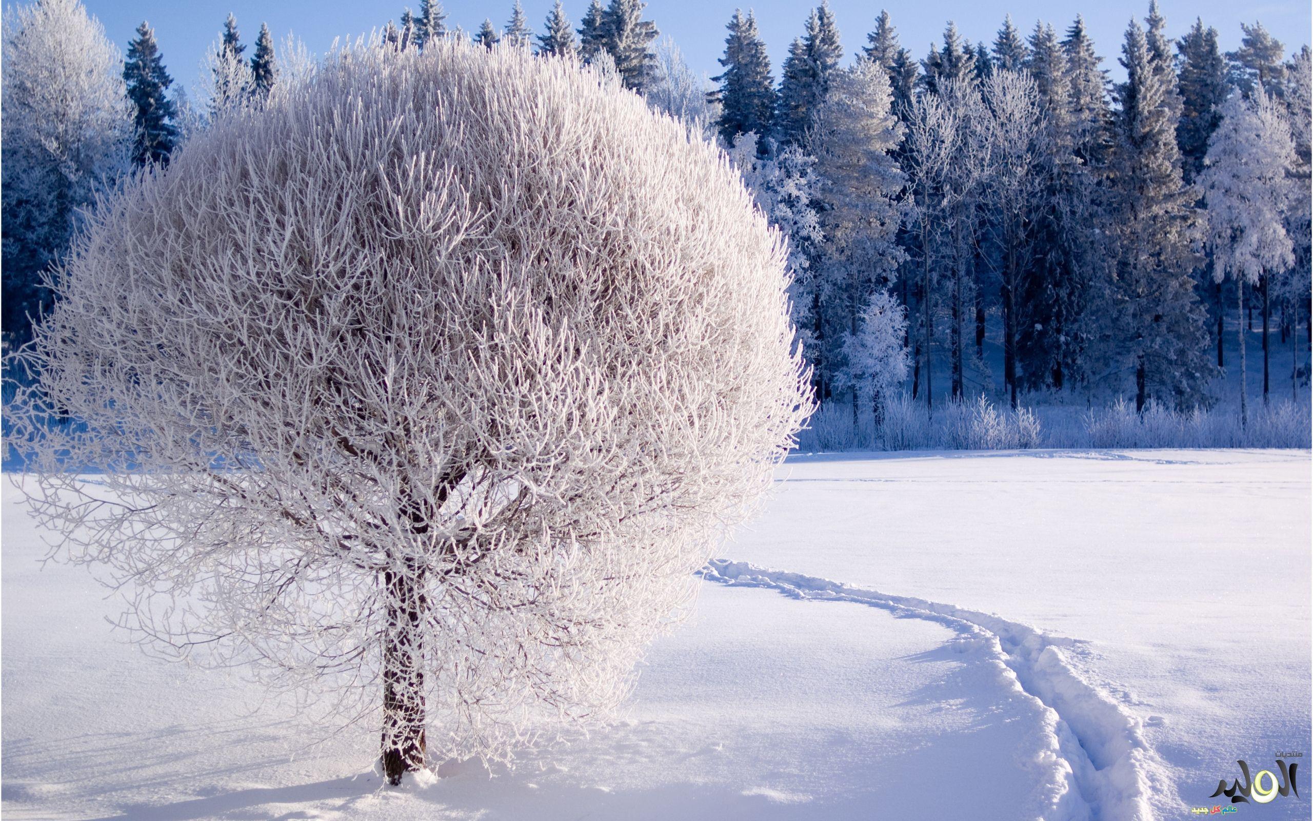 وااااو Winter Wallpaper Hd Nature Wallpapers Winter Background