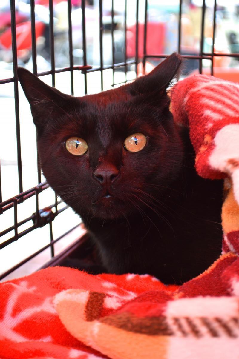 14++ Stray animal adoption program images