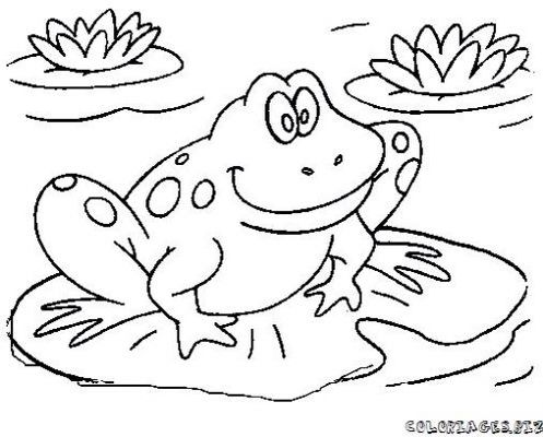 Easy to draw frog | summer | Pinterest