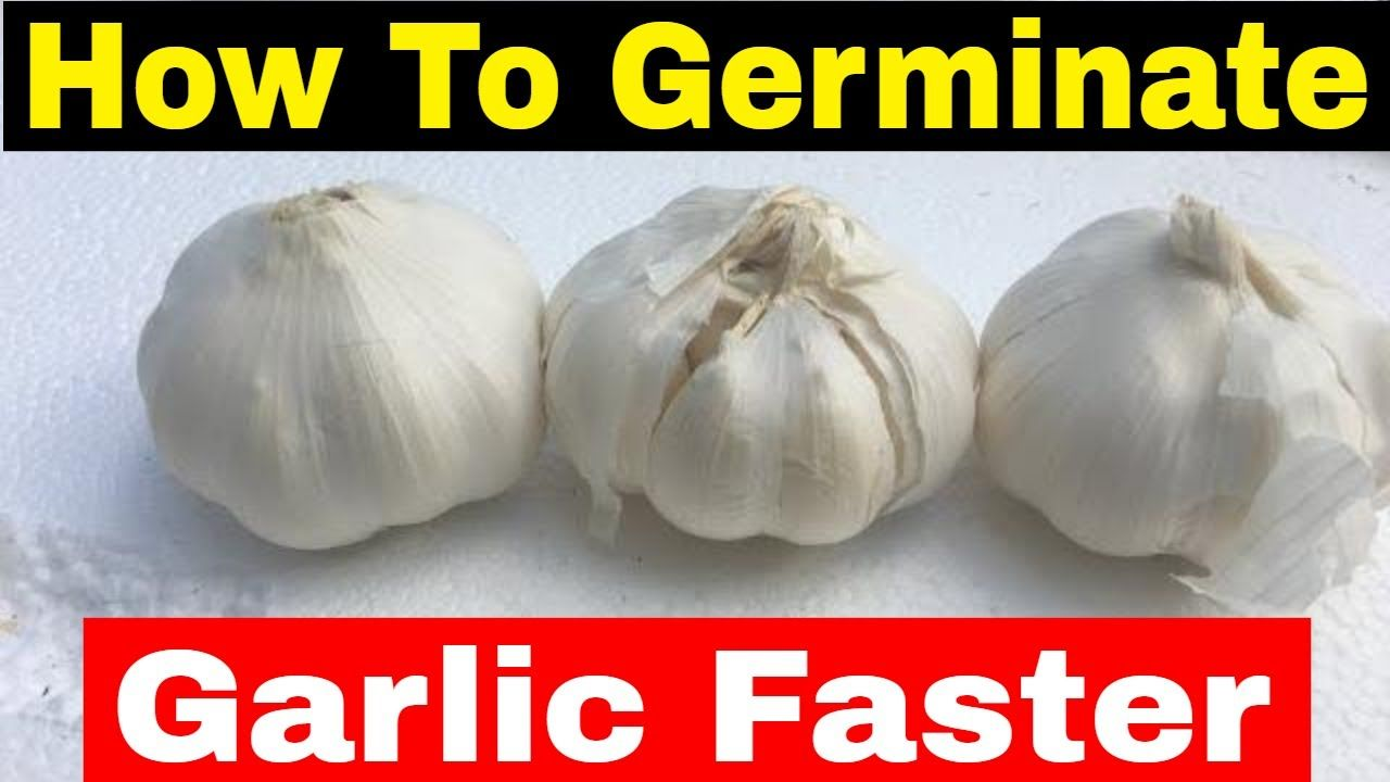 4d78d395c5df5da689b4d542b0841bc1 - How To Get Rid Of Garlic Smell In Container