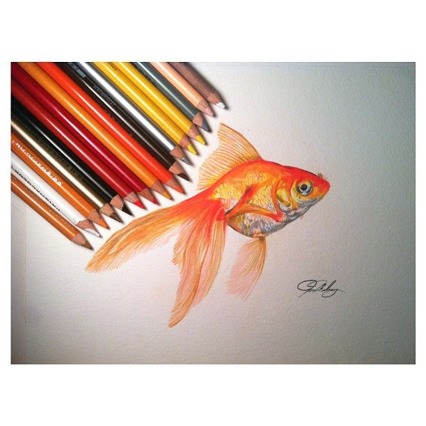 Gallery For Gt Gold Fish Drawing In Pencil Color Pencil Drawing Color Pencil Art Pencil Drawing Tutorials