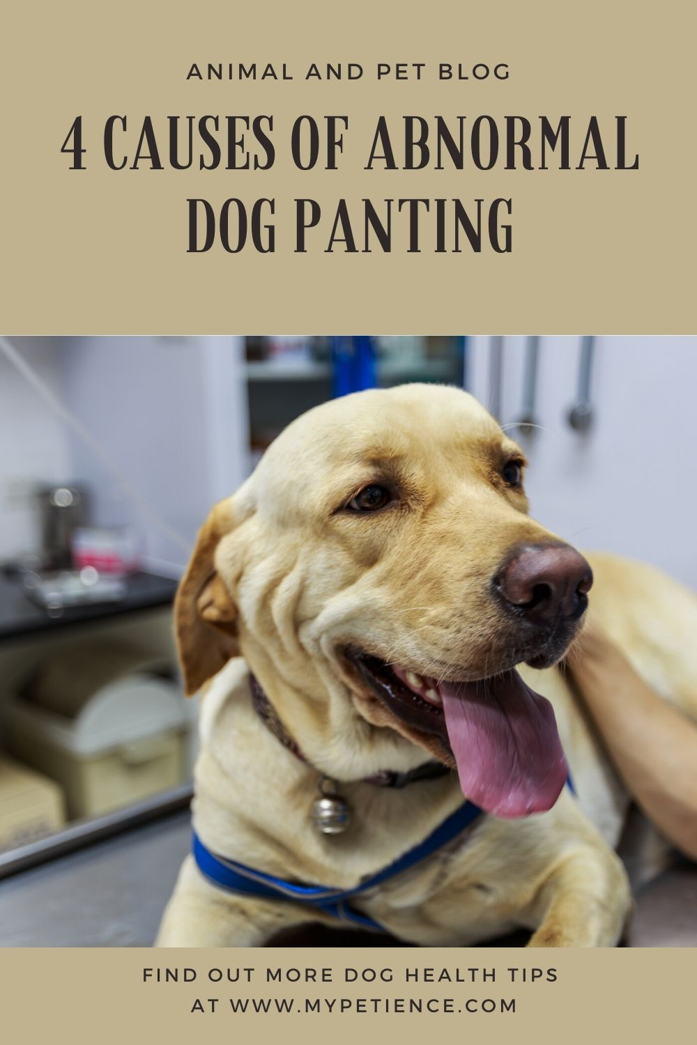 Why Is My Dog Panting and Restless? in 2020 Dog pants