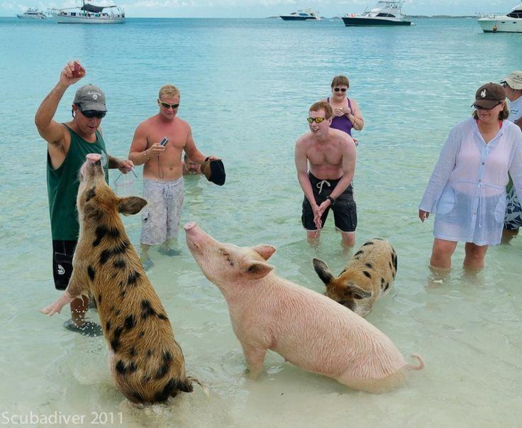 Bahamas Urlaub Und Reisen