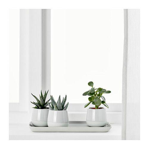 succulent pflanze mit bertopf grau mamas zimmer pinterest bert pfe ikea sukkulente. Black Bedroom Furniture Sets. Home Design Ideas