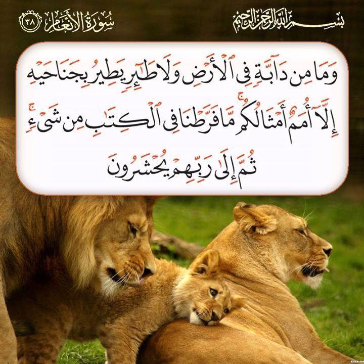 و م ا م ن د اب ة ف ي ال أ ر ض و ل ا ط ائ ر ي ط ير ب ج ن اح ي ه إ ل ا أ م م أ م ث ال ك م م ا ف ر ط Quran Verses Prayer For The Day Islamic Messages