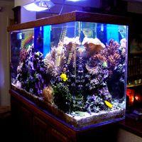Living Art Aquatic Design   Custom Aquariums, Reefs, Ponds, Waterfalls And  Maintenance   Homepage