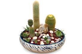 vasi per piante succulente