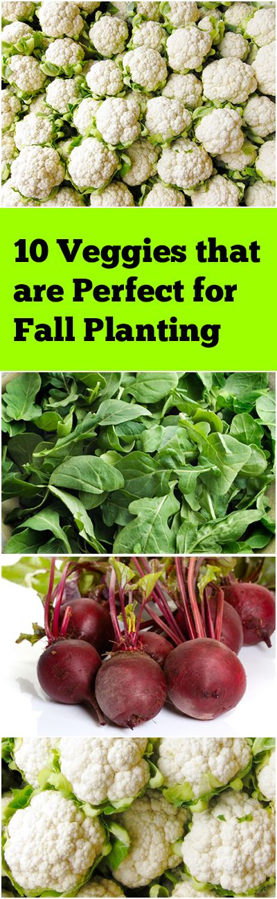 10 Plants You Should Plant In The Fall