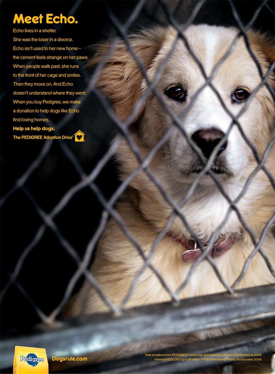 Do not pity a shelter dog. Adopt one. A Call to Action
