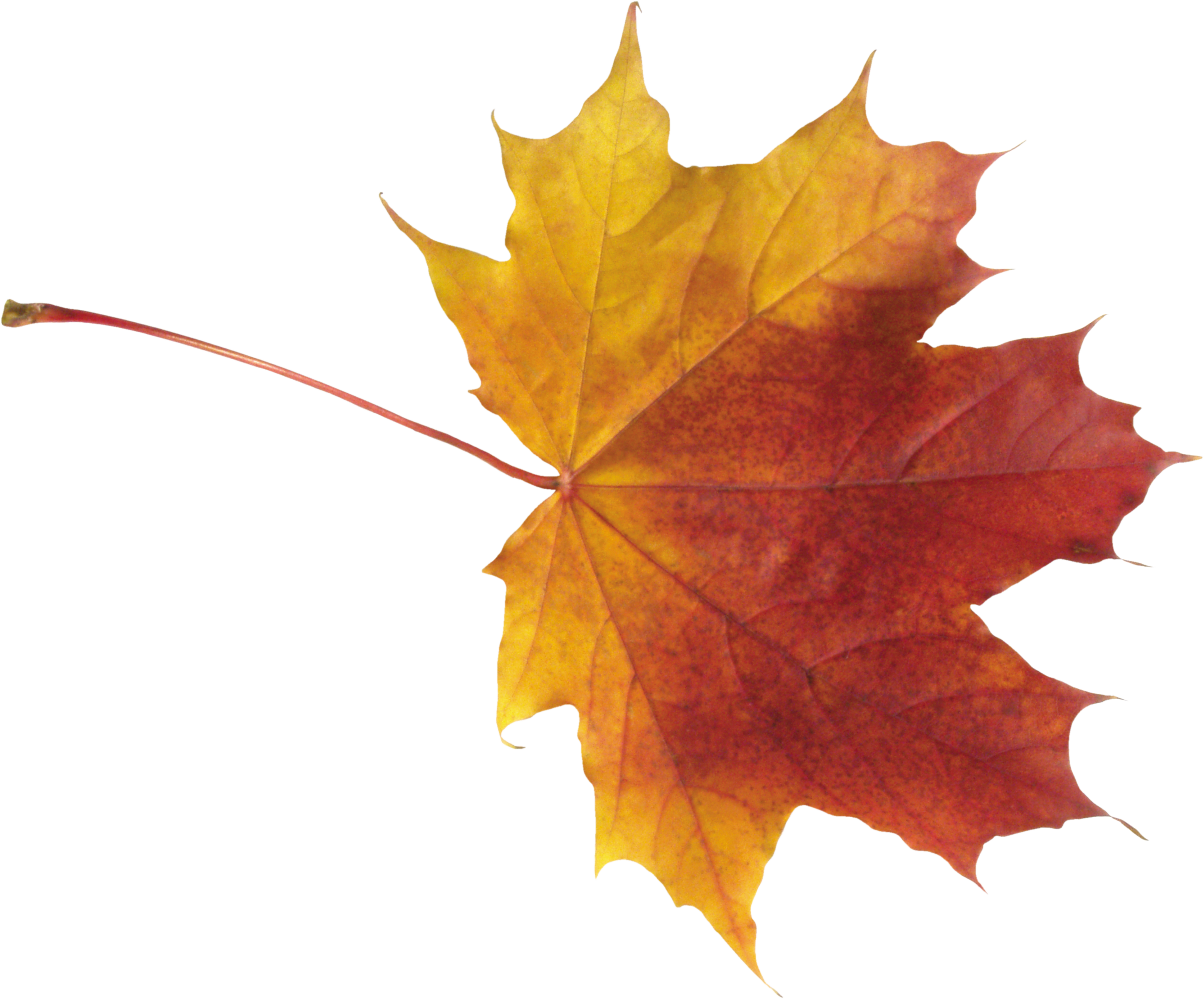 Autumn Leaf Png Image Fall Leaves Png Leaves Autumn Leaves