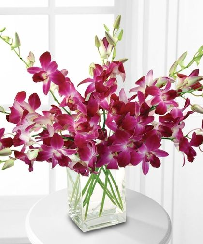 Beautiful Orchids Orchid Vase Beautiful Orchids Dendrobium Orchids