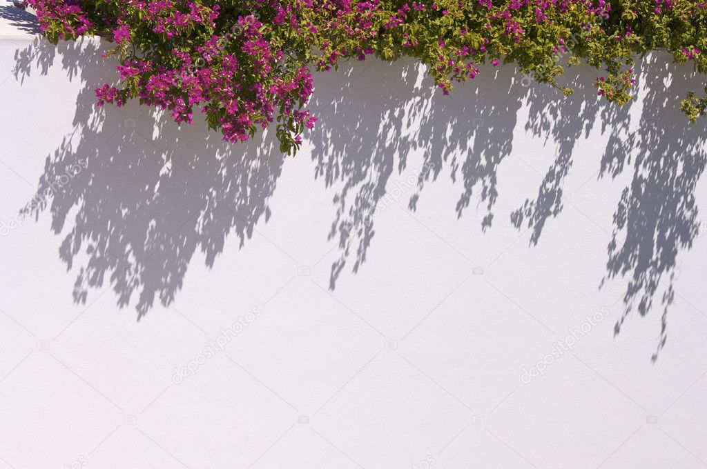 Bougainvilleas Casting Shadow - Stock Photo , #AD, #Casting, #Bougainvilleas, #Shadow, #Photo #AD