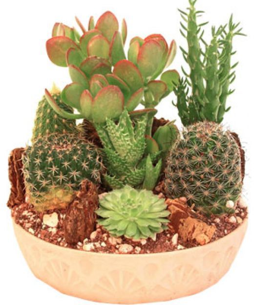 Rather Than Ing A Cactus Garden You Can Easily Create Your Own With Little Investment