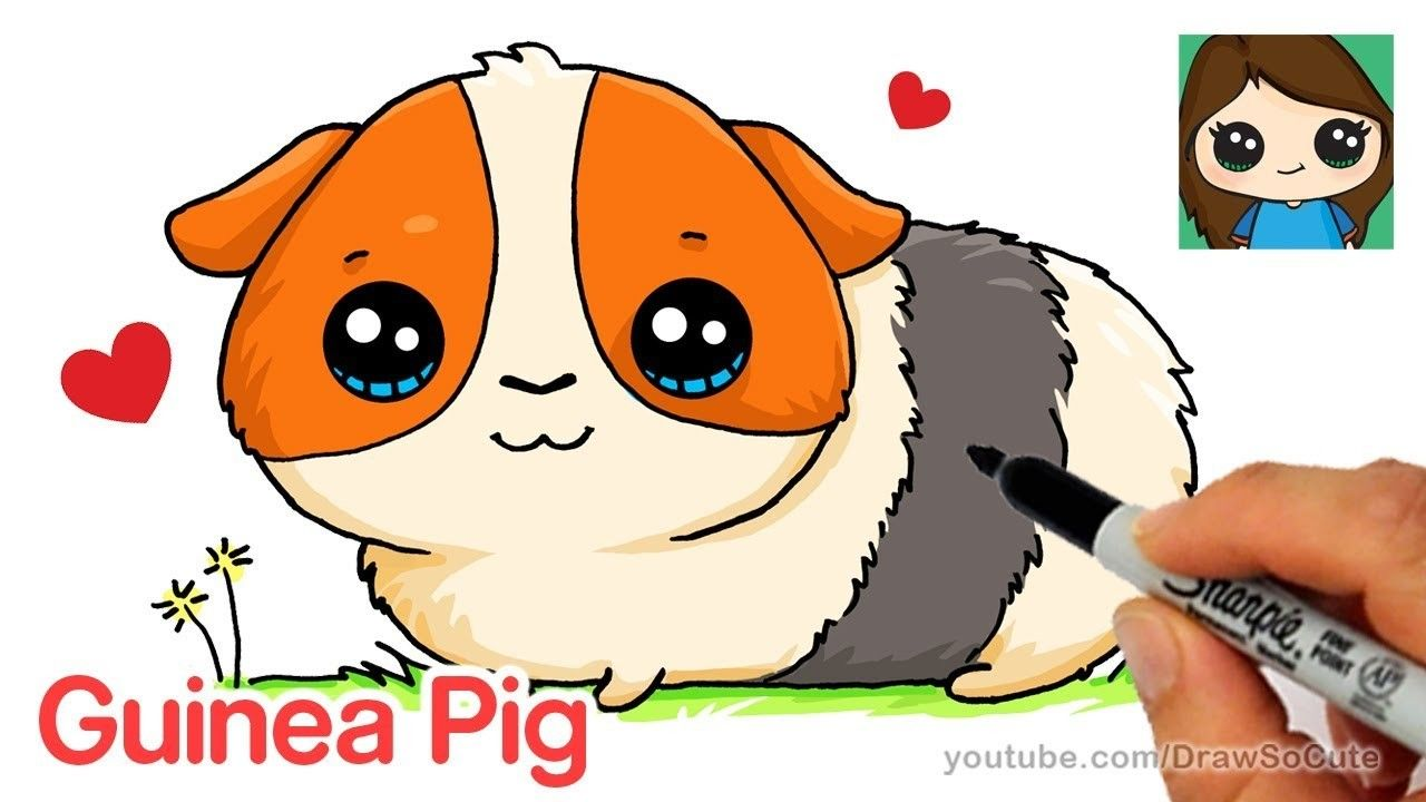 How to Draw a Guinea Pig Easy and Cute