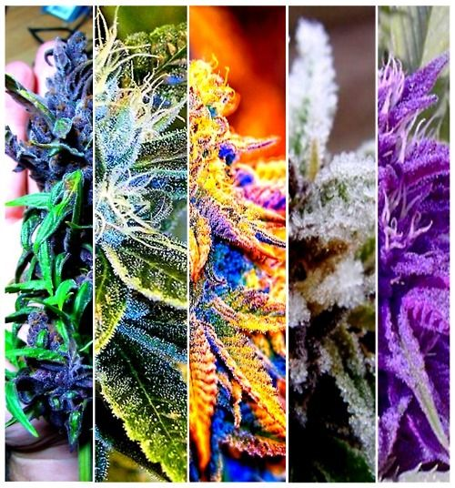 amazing colorful weed pictures