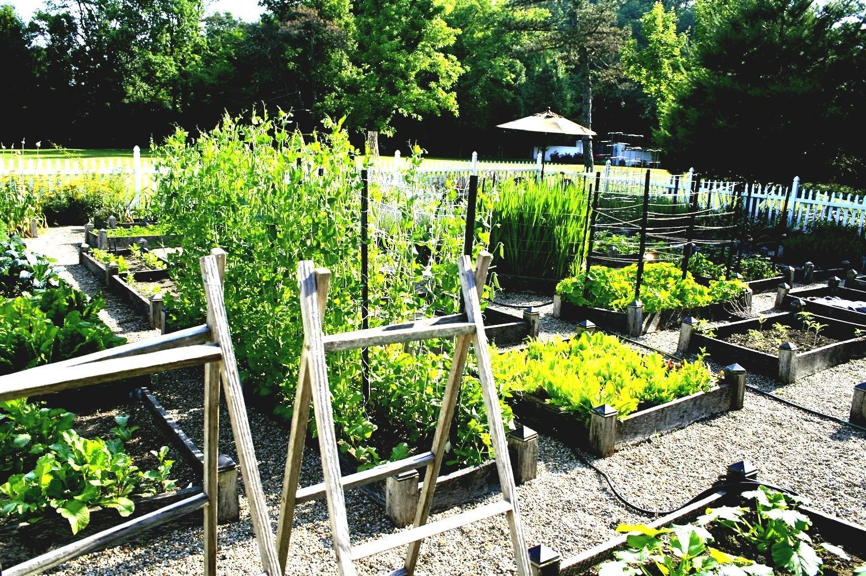 Gemuse Garten Bett Ideen Gartendeko Vegetable Garden Planning Garden Layout Vegetable Raised Vegetable Gardens