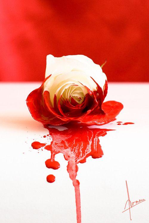 Sangue.