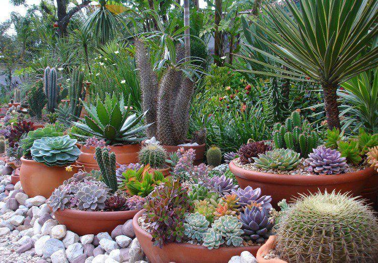 Entretien Des Plantes Exterieur