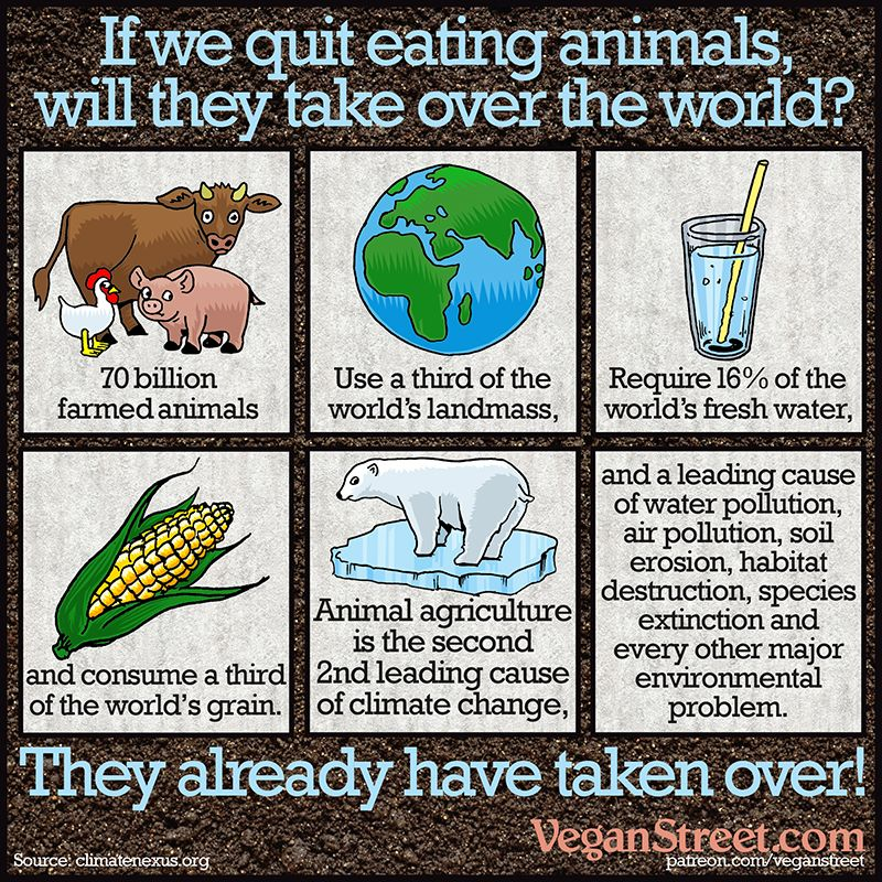 Some People Say That If Everyone Stopped Eating Meat Farmed