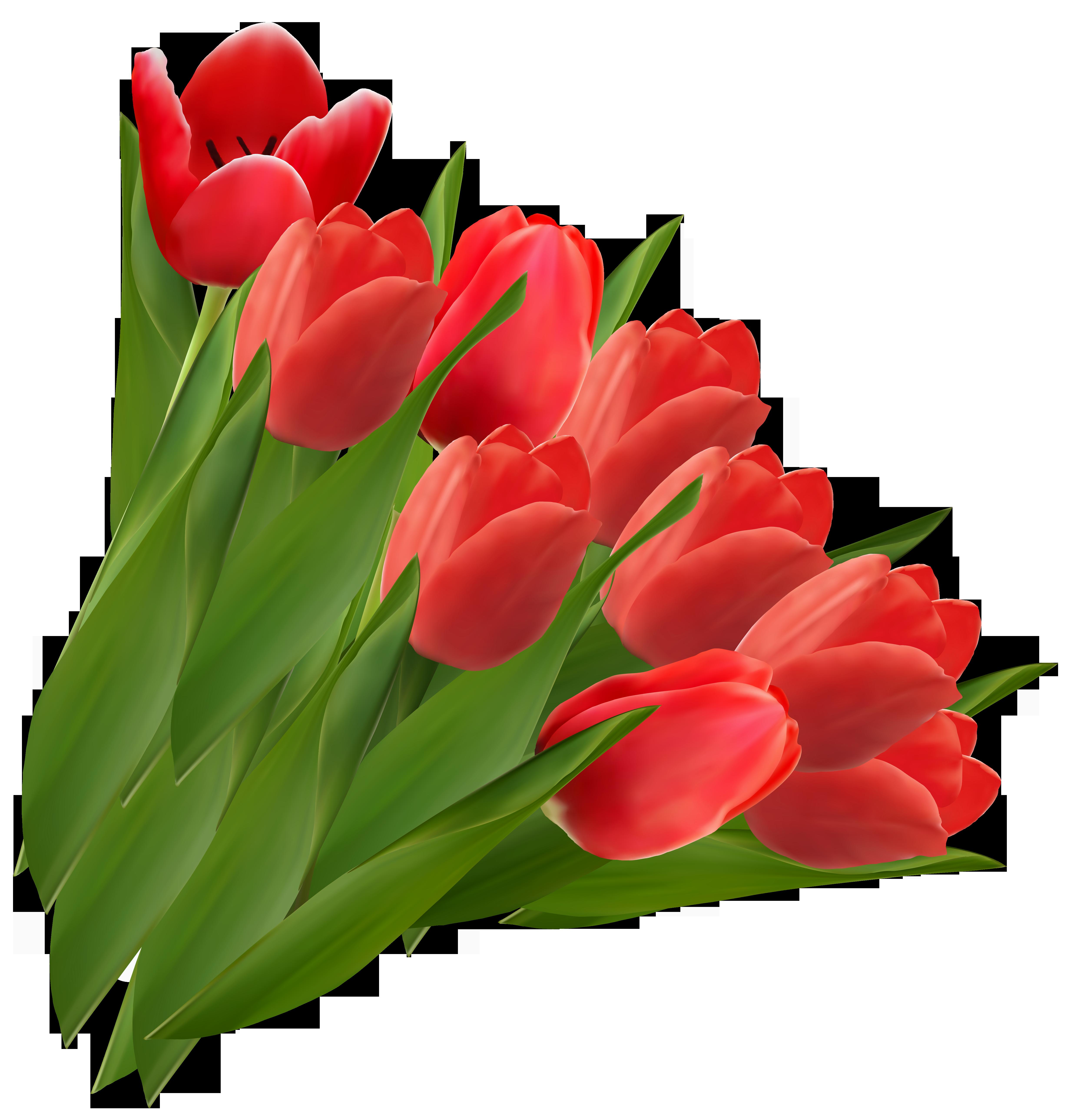 Обои Red, tulips. Разное foto 3