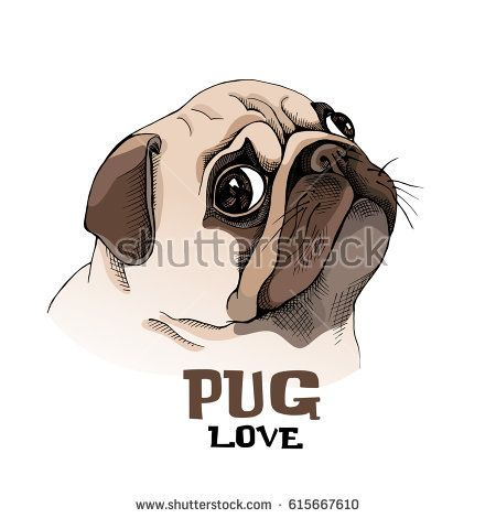 Portrait Of A Pug Puppy In Profile Vector Illustration Pug Art