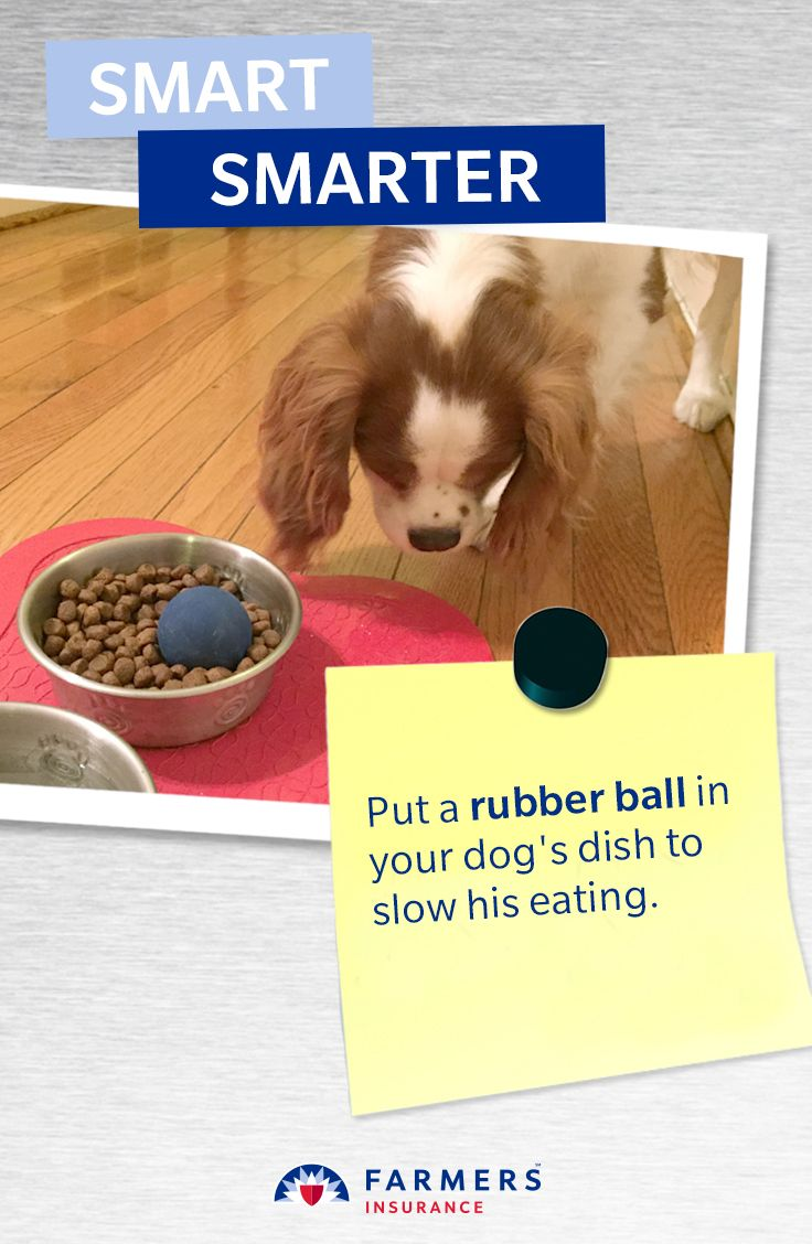 Put a rubber ball in your dog's dish to slow his eating