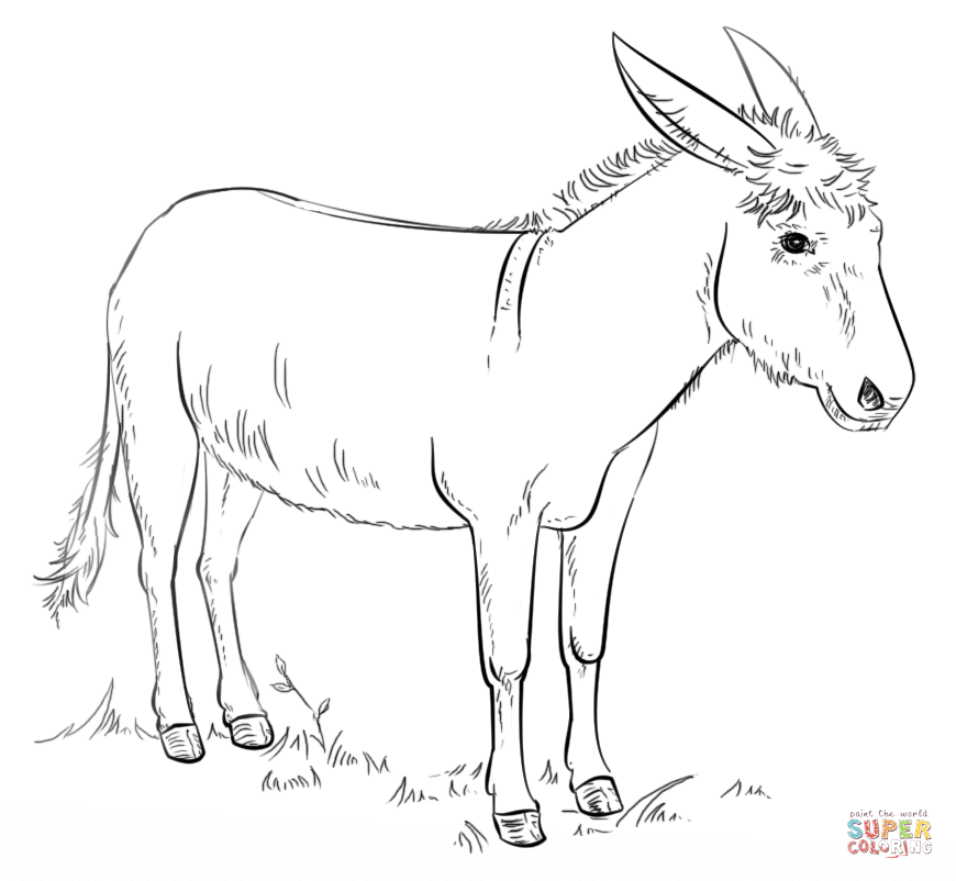 Donkey Coloring Page Free Printable Coloring Pages Drawing Tutorial Donkey Drawing Animal Drawings