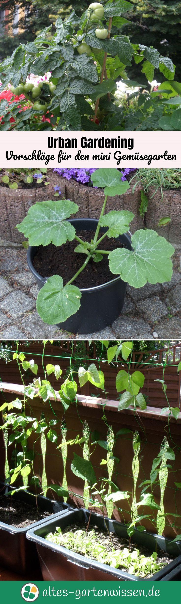 Urban Gardening - Vorschläge für den Mini-Gemüsegarten