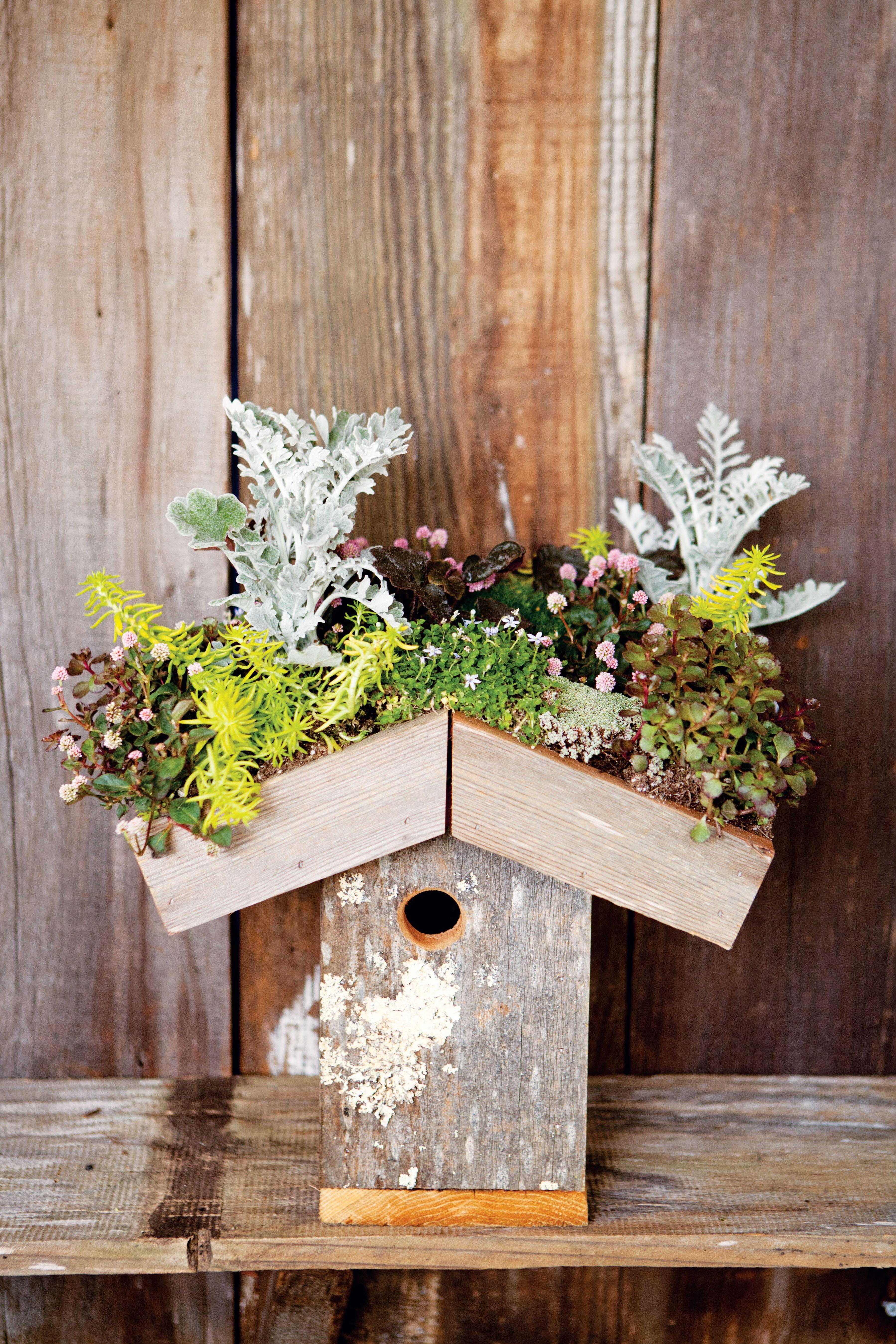 Favorite DIY Garden Projects Sunset Winter plants