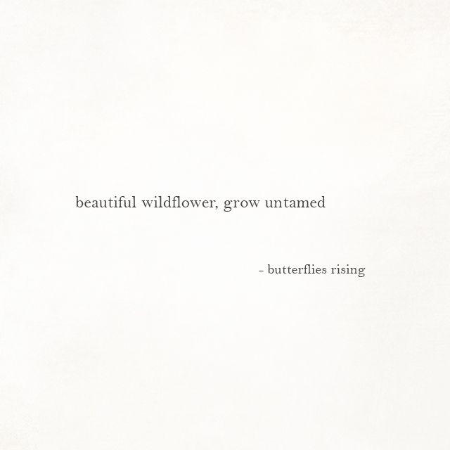 beautiful wildflower, grow untamed