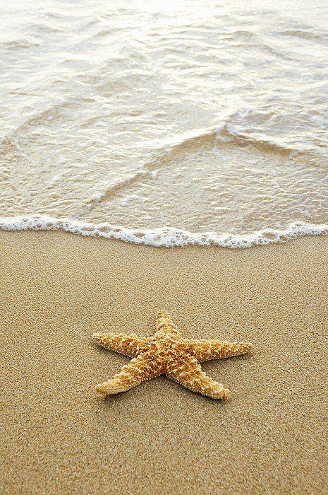 Starfish On Beach Print By Mary Van De Ven