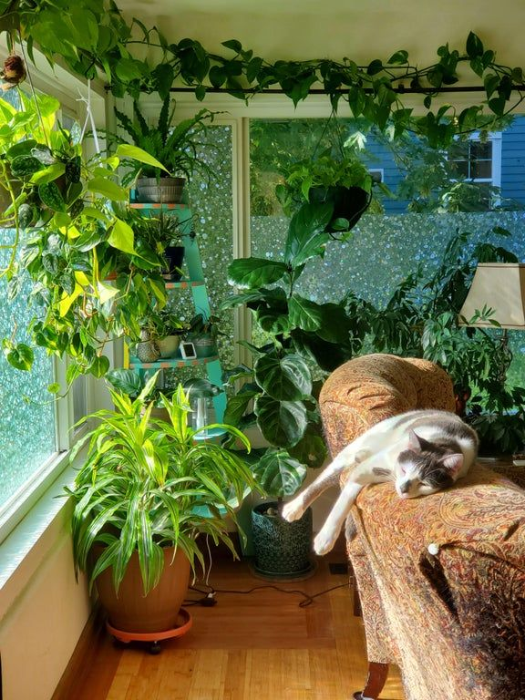 One of my plant corners and one of my cats all enj