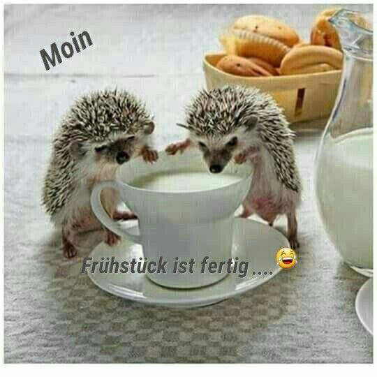 -  - #good Morning - #good #morning #quotesaboutcoffee
