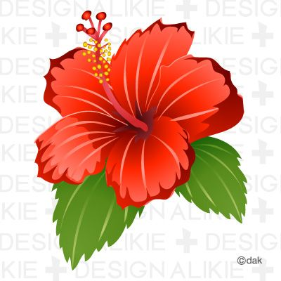 Hibiscus Flower Pictures Of Clipart And Graphic Design And