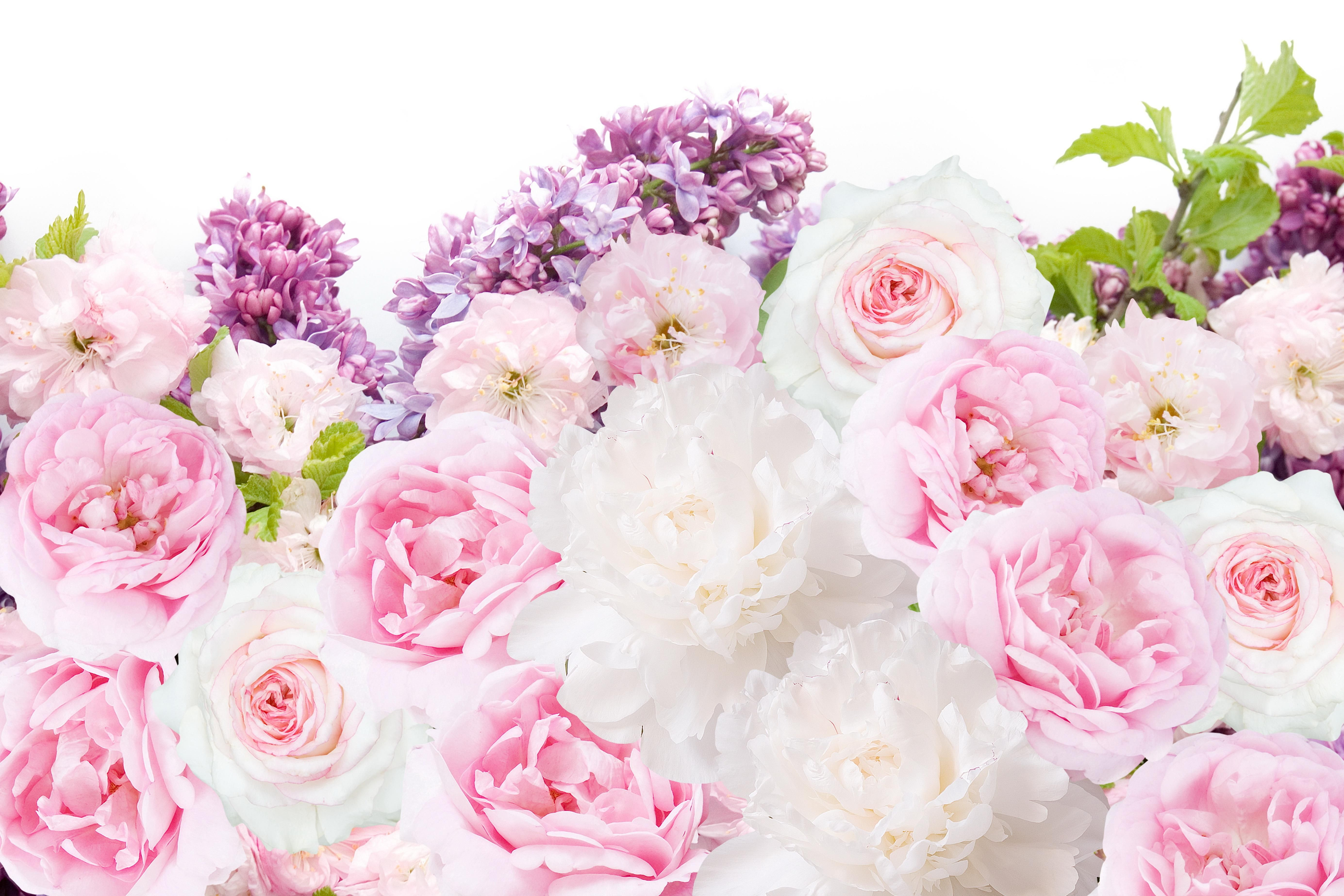 Pink white peonies floral desktop wallpaper background