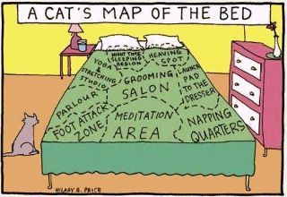 A cat's map of the the bed