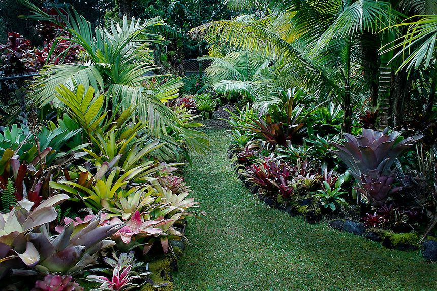 Bromeliad garden filled exclusively with unusual and rare for Unusual trees for small gardens