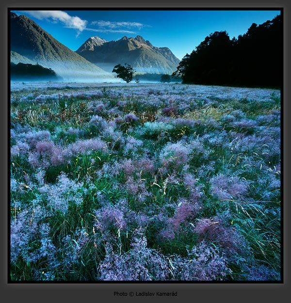 Fiordland National Park, New Zealand.