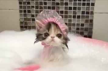 This Kitten Wearing A Shower Cap While Taking A Bath Is Going Blow Your Mind Gato Tomando Banho Touca De Banho Gatos