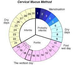 Cervical Mucus Method Chart