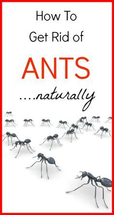 How To Get Rid Of Ants Naturally Rid Of Ants Ants Get Rid Of Ants