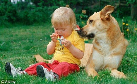 How To Beat Pet Allergy A Cat Or Dog At Home Could Halve Risk Pet Allergies Service Dogs Guard Dogs