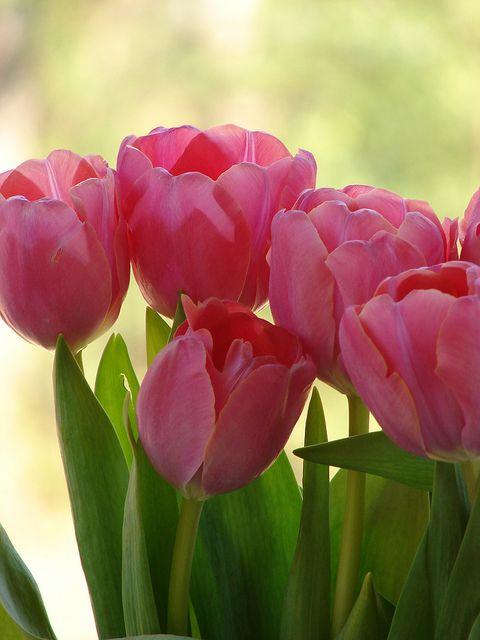 Belleza de primavera ...   Flickr: Intercambio de fotos