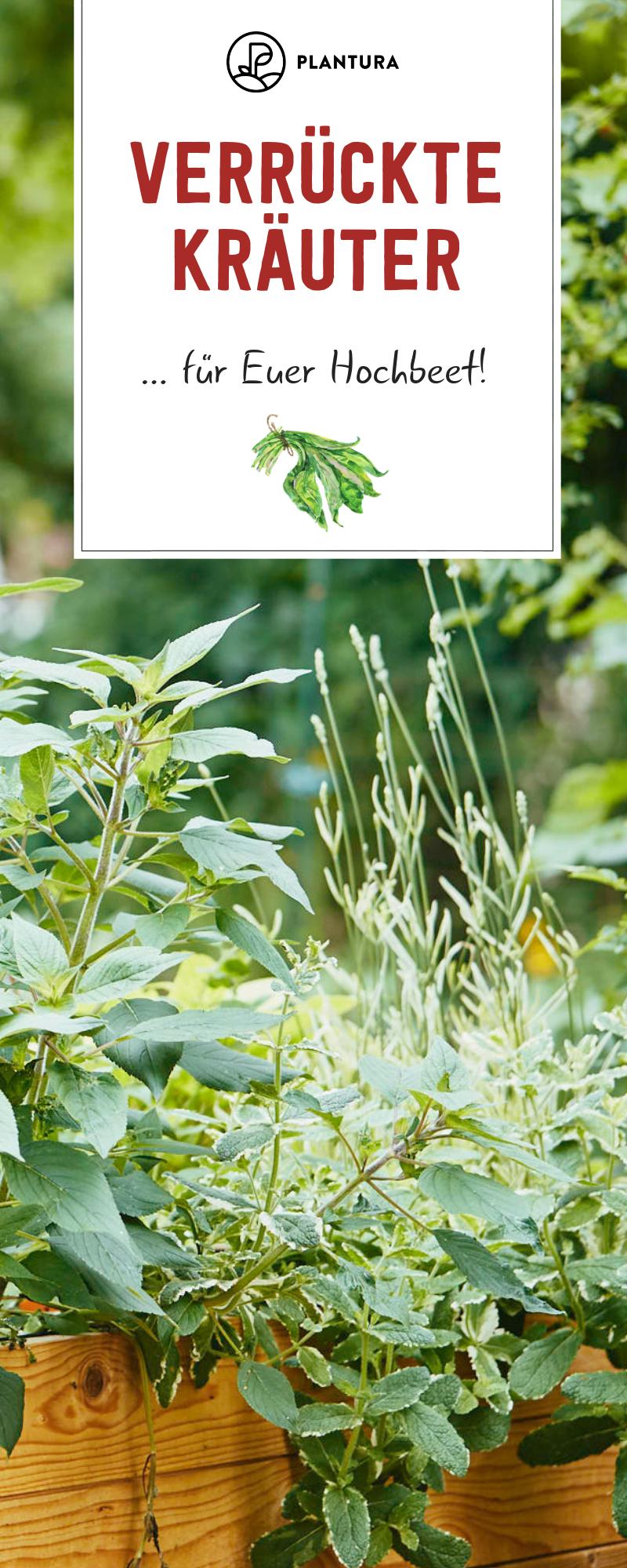 Verruckte Krauter Fur Das Hochbeet Die Top 5 Plantura Hochbeet Erhohte Pflanzbeete Bepflanzung