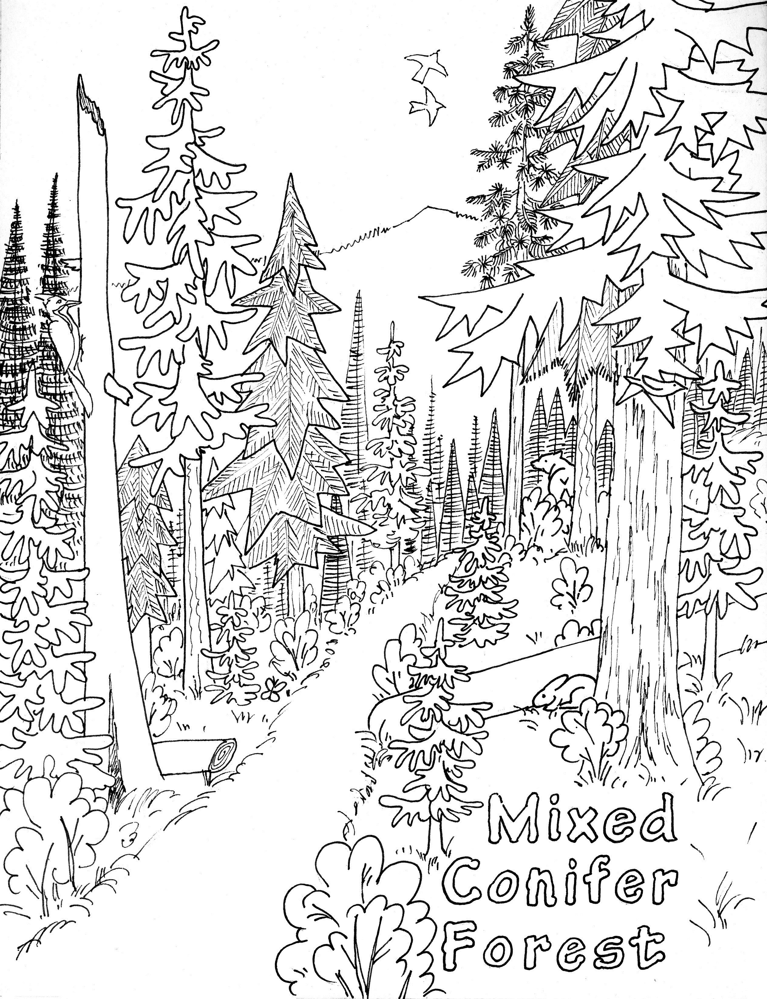Free Printable Nature Coloring Pages For Kids Tree Coloring Page