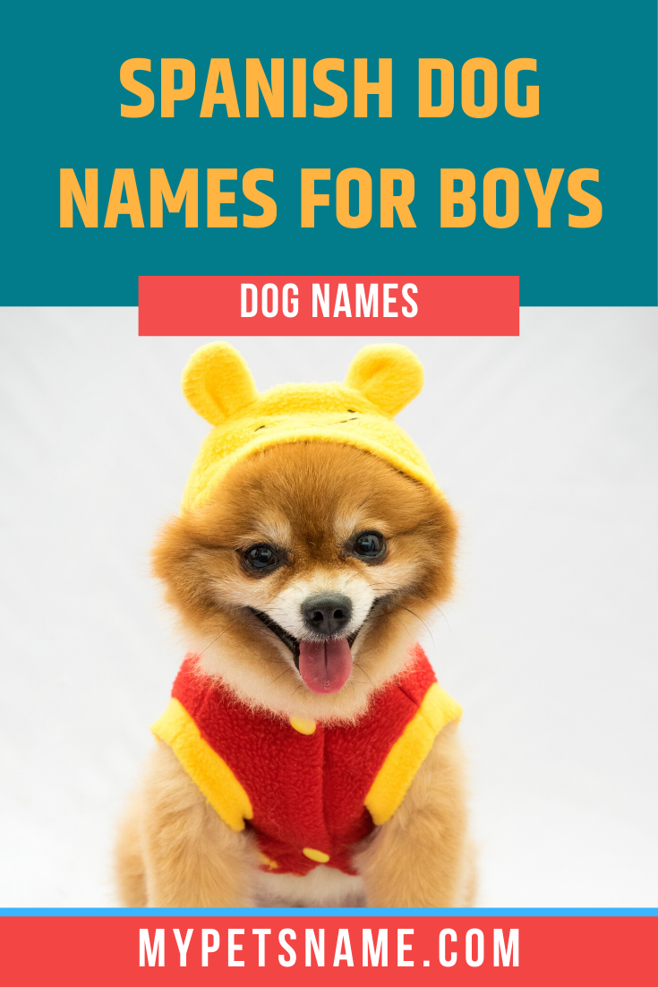 Boy Spanish Dog Names In 2020 Dog Names Cute Names For Dogs Boy Dog Names