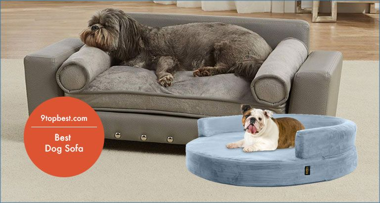 Top 9 Best Dog Sofas To Offer Your Dogs A Comfortable Resting