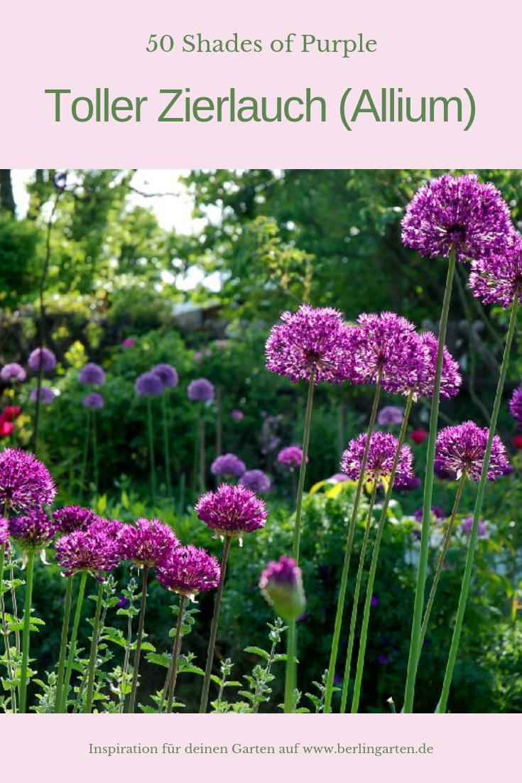 zierlauch f r den garten im mai 50 shades of purple. Black Bedroom Furniture Sets. Home Design Ideas